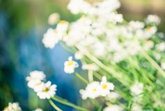 Blur Nature stock images
