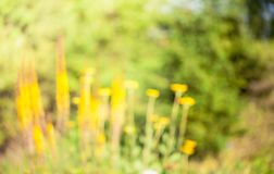 Blur Nature Background. Abstract nature blured background with beautiful bokeh. Defocused green background with sunshine and leaves. Blur image of yellow flowers Royalty Free Stock Photography
