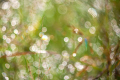 Blur nature background Stock Photo