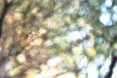 BLUR NATURE. GREEN TREE BOKEH AND BLUR Stock Photo