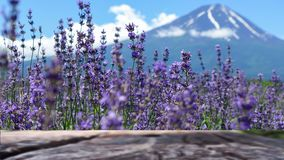 Blur old wooden top on seblur old wooden top on selection focus lavender on blur Fuji Mountain background in summer , Japan. Blur old wooden top on selection Stock Photos