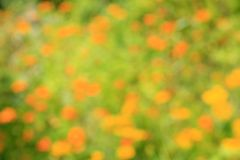 Blur orange flower. For background Royalty Free Stock Images