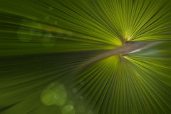 Blur of palm leaf. Stock Images