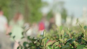 Blur of people walking in street with focused green plants on right corner. Slow motion stock footage