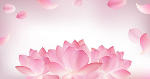 Blur pink background with pink petal of lotus Royalty Free Stock Image