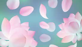 Blur pink background with pink petal of lotus Royalty Free Stock Image