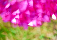 Blur pink and green Stock Images