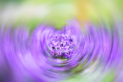 Blur Purple flowers. Flower garden With beautiful purple and white flowers Royalty Free Stock Images
