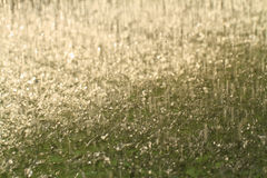 Blur rain Stock Image