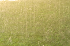 Blur rain Stock Photography
