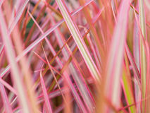 Blur of Rainbow Tree Stock Image