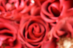 Blur red rose background Stock Images