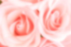 Blur rose background Stock Photos