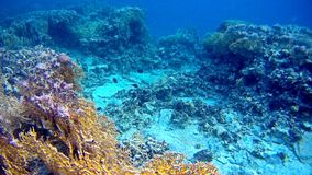 Blur semicolor Coral reef  in Red Sea. Underwater Blur semicolor  coral reef in the Red Sea Stock Images