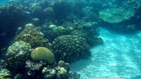 Blur semicolor Coral reef  in Red Sea. Underwater Blur semicolor  coral reef in the Red Sea Royalty Free Stock Image