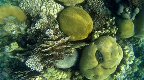 Blur semicolor Coral reef  in Red Sea. Underwater Blur semicolor  coral reef in the Red Sea Royalty Free Stock Photography