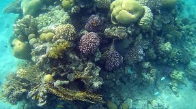 Blur semicolor Coral reef  in Red Sea. Underwater Blur semicolor  coral reef in the Red Sea Royalty Free Stock Photo