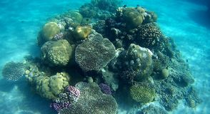Blur colorfull Coral reef  in Red Sea. Underwater  coral reef with yellow,red,green hard and soft colorfull corals in clear blue water in the Red Sea Royalty Free Stock Photos