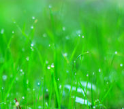 BLur shiny grass background Stock Images