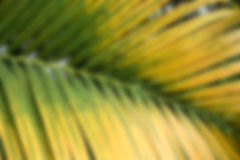 Blur and soft focus of leaf Stock Photo
