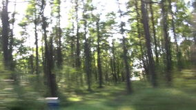 Blur speed background. Forest from car window stock video