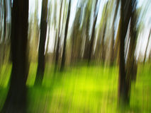 Blur spring forest Royalty Free Stock Images