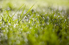 Blur summer dewy grass background Royalty Free Stock Photo