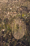Blur summer end meadow grass  and spiderwebs background Royalty Free Stock Images