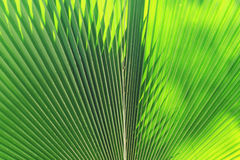 Blur of Sun shining through a radiating green leaf Stock Photography
