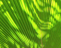 Blur of Sun shining through a radiating green leaf Royalty Free Stock Photography