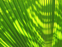 Blur of Sun shining through a radiating green leaf Royalty Free Stock Image