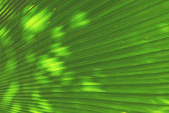 Blur of Sun shining through a radiating green leaf Royalty Free Stock Images