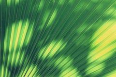 Blur of Sun shining through a radiating green leaf Stock Photo
