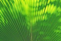 Blur of Sun shining through a radiating green leaf Stock Photos