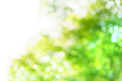 Free Blur Tree Background Royalty Free Stock Photos - 52697938