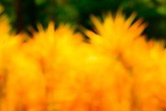 Blur tree background Stock Photo