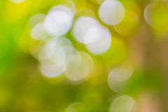 Blur of the tree. Bokeh blur of the tree Stock Images
