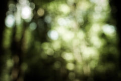 Blur tree in forest Stock Photos