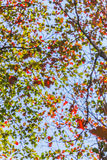 Blur of trees Stock Photography