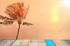 Blur tropical sunset beach with palm tree abstract background. Stock Photos