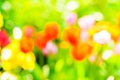 Blur tulips in garden. Stock Images