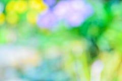 Blur tulips in garden. Royalty Free Stock Photo