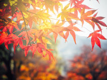Blur vivid autumn natural background Stock Image