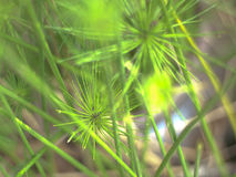 Blur waterplant background. Close up blur water plant background Stock Image