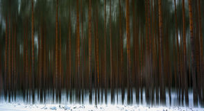 Blur. At winter the forest is wery beautifull!! An when them ad some blur effect on trees , then the forest make more wonderfull Stock Image