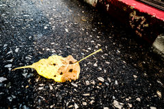 Blur yellow leaf on street. Blur One yellow leaf floating on flooding street Royalty Free Stock Photo