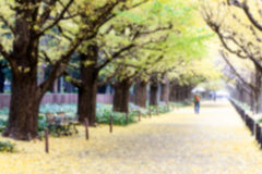 Blur of yellow leafs on walking street in the morning Stock Photo