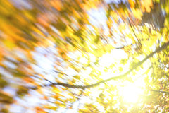 Blur of yellow leaves Royalty Free Stock Image