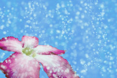 Blure-bokeh Schneeblumenbeschaffenheitstapeten und -hintergründe Stockfoto