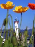 blure Mohnblumen mit dem Leuchtturm Stockbilder